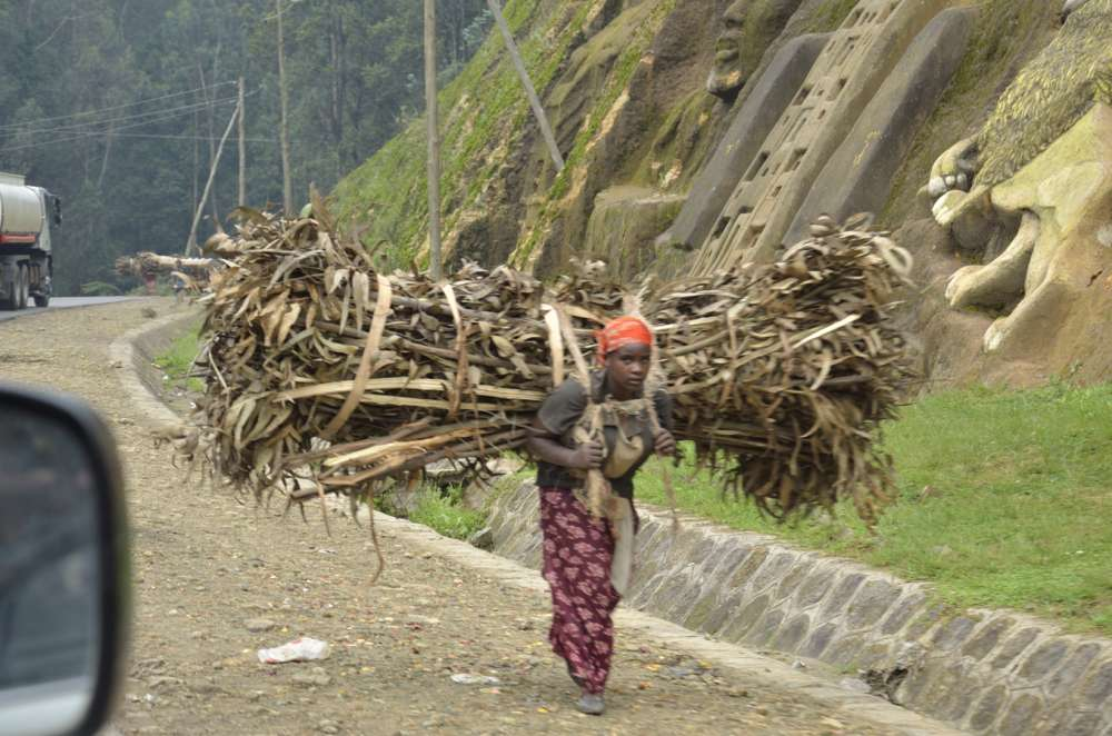 Woman carrying firewood down into Addis Ababa from the Eucalyptus forests
