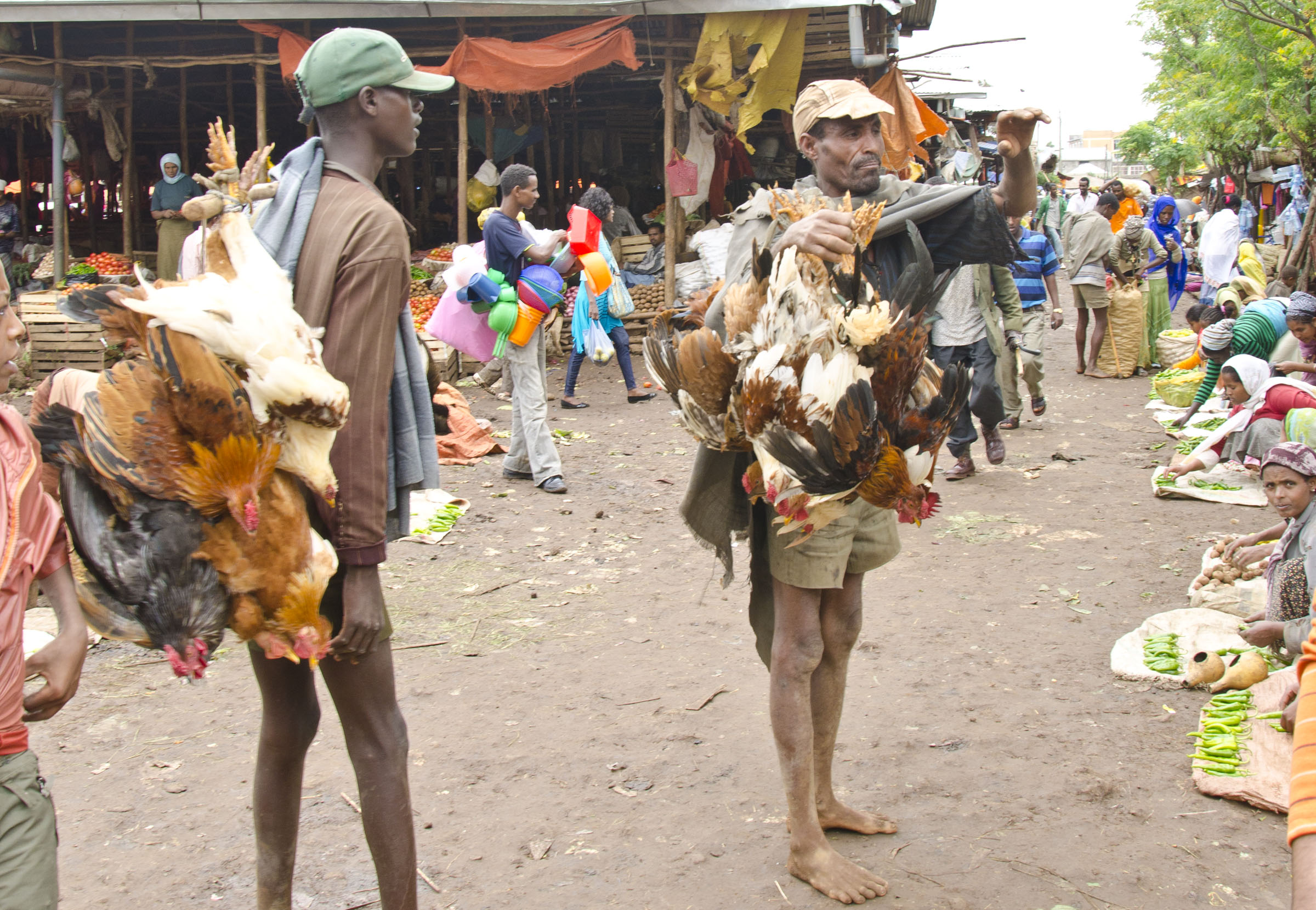 Live hens on pole in market, Bahir Dar