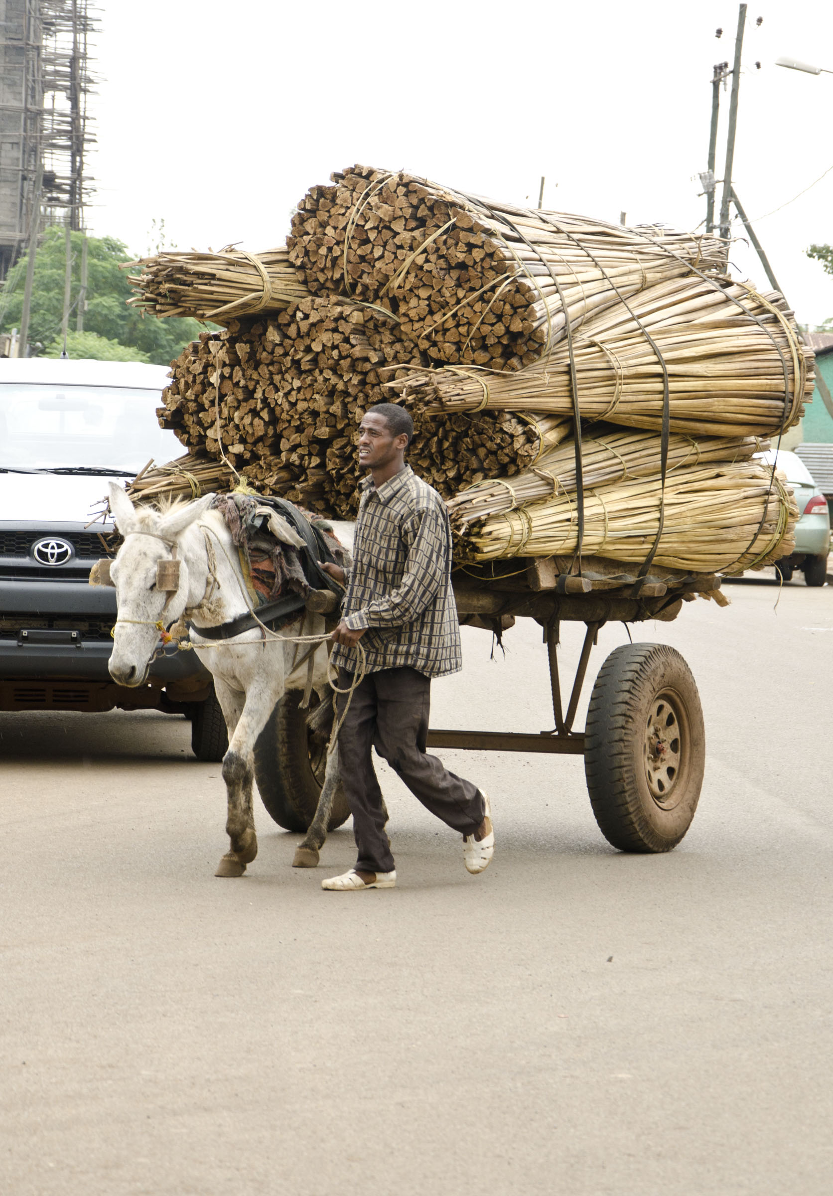 Horse drawn timber cart, Bahir Dar, Ethiopia