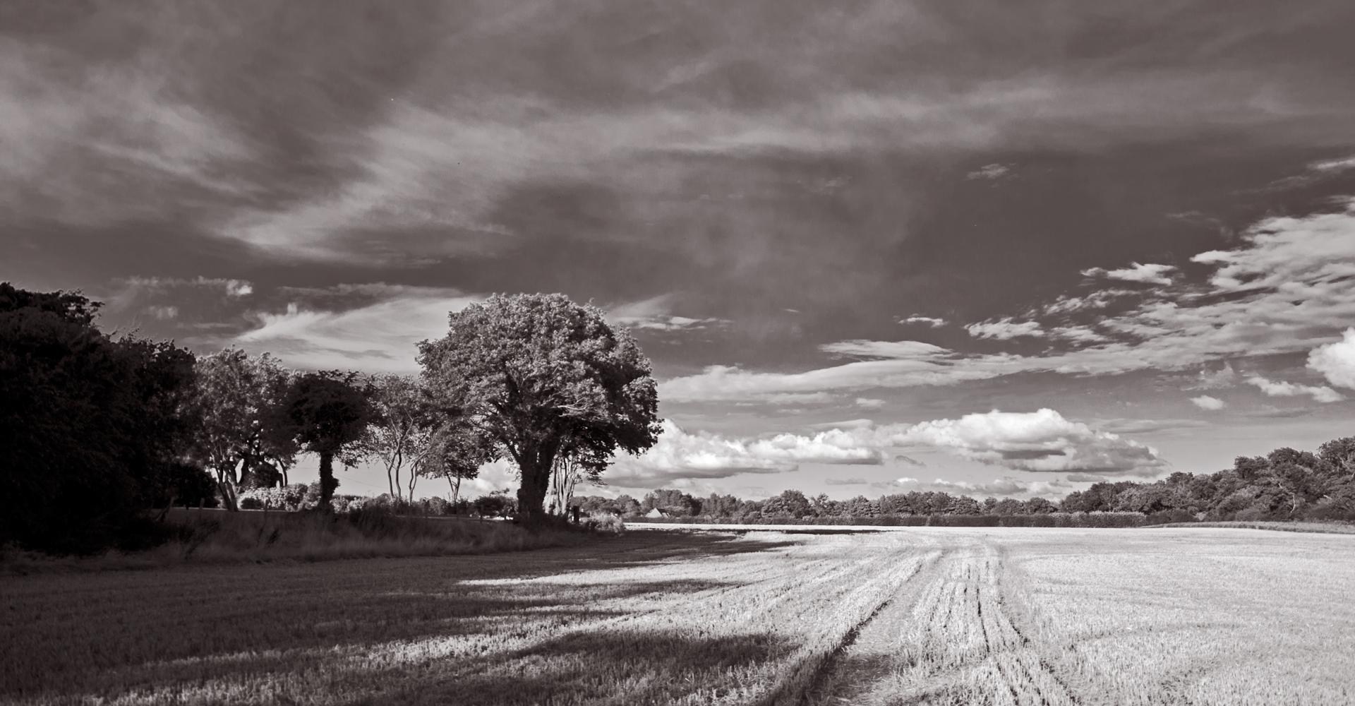 Late autumn fieldscape, Swingfield Street , Kent